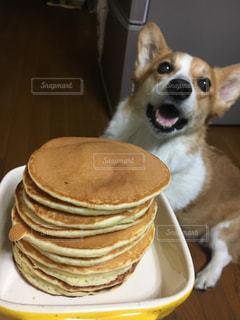 犬,パンケーキ,美味しそう,ホットケーキ,料理
