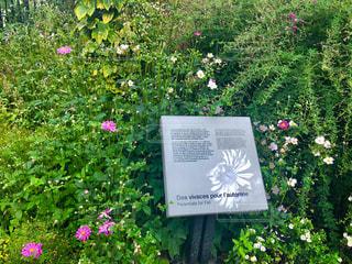 花,秋,海外,植物,コスモス,綺麗,景色,草,外国,旅行,カナダ,植物園,景観,草木,日中,花々,ケベック,モントリオール植物園