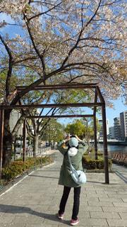 桜の下で撮影する家内の後ろ姿の写真・画像素材[2136665]