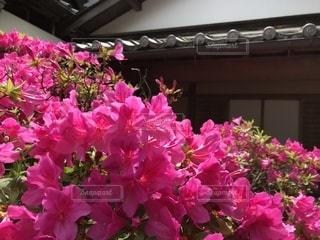 自然,建物,花,ピンク,景色,旅行,お寺