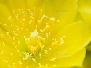 花,屋外,黄色,サボテン,イエロー,初夏,カラー,六月