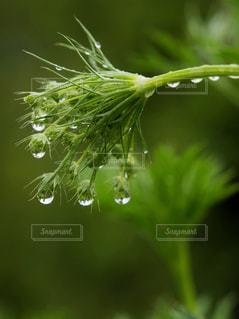 屋外,緑,植物,水滴,葉,水玉,雫,五月,ドロップ,雨粒