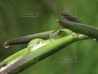 屋外,緑,植物,水滴,雫,グリーン,雨粒,四月