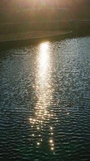 自然,空,公園,屋外,太陽,水面,反射,光