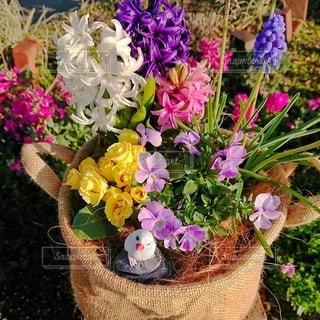 花の盛り合わせの写真・画像素材[3030273]