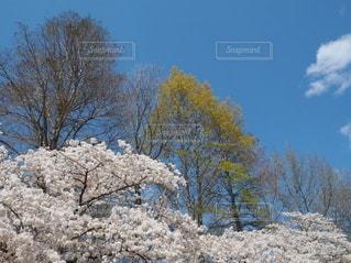 写真で花見の写真・画像素材[3080812]