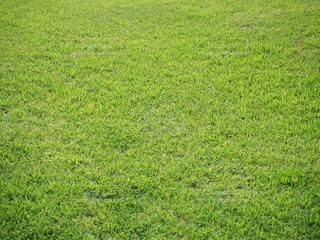 緑の芝生のクローズアップの写真・画像素材[3367415]