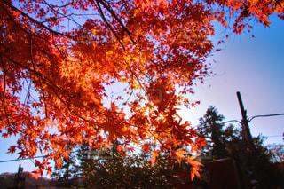 風景,空,秋,雲,風,鎌倉,思い出,秋空,お出かけ,日中