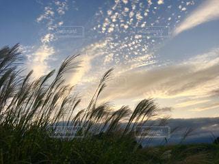 風景,空,夕焼け,夕方,ススキ,秋空,秋の夕暮れ,ススキ野原