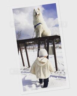 雪の上に立つ銅像の写真・画像素材[1685451]