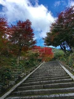 紅葉,屋外,青空,もみじ,樹木,秋空