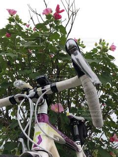 ロードバイクとお花のコラボの写真・画像素材[1519730]