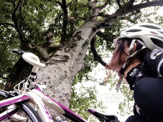自転車と同じ視線で見上げてみるの写真・画像素材[1522015]
