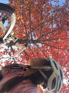 紅葉とロードバイクと私の写真・画像素材[1522037]