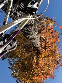 紅葉とロードバイクの写真・画像素材[1601606]