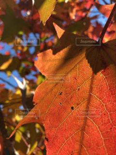 近くの木のアップの写真・画像素材[1601612]