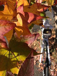 近くの木からぶら下がっている花のアップの写真・画像素材[1601623]