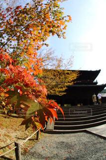 秋,紅葉,京都,紅葉狩り