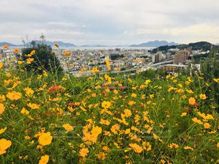 空,花,秋,屋外,カラフル,景色,草