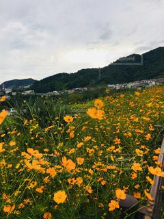 空,花,秋,屋外,景色,草木