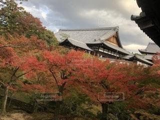 東福寺の紅葉の写真・画像素材[1665867]