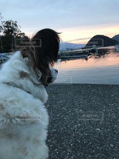 犬,自然,風景,空,動物,屋外,雲,夕暮れ,くもり,海と夕日,犬と夕日