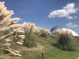 空,秋,景色,ススキ,草木,モリコロパーク