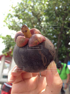 フルーツ,タイ,マンゴスチン