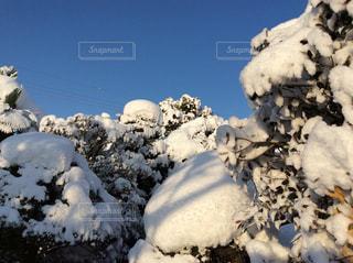 雪の山、ではなく、うちの庭。の写真・画像素材[1703517]