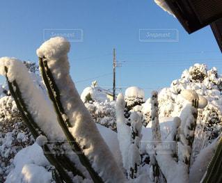 雪に朝日が差してきての写真・画像素材[1737605]