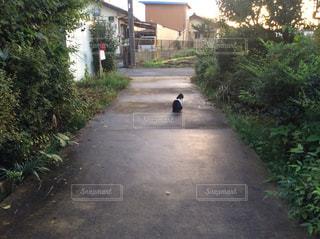 猫,屋外,緑,植物,後ろ姿,道路,道,後姿,ポスト,座っている猫
