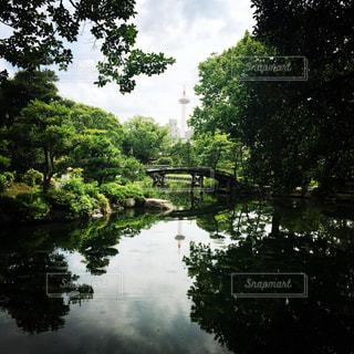 渉成園から見た京都タワーの写真・画像素材[1665999]