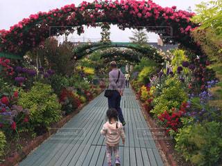 花,後ろ姿,女の子,アーチ,おじいちゃん