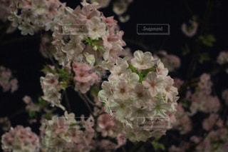 花,屋外,ピンク,景色,草木