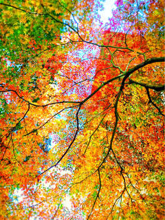 鮮やか,樹木,草木,カエデ,紅葉  秋の空,紅葉の川