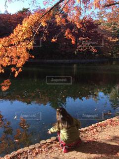 秋,紅葉,雲場池