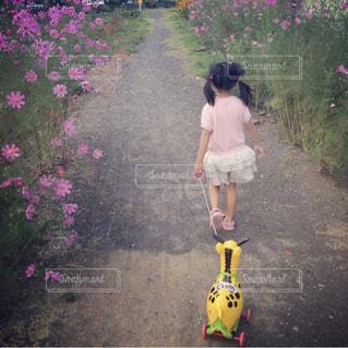 コスモス,散歩道,秋の景色,娘と散歩