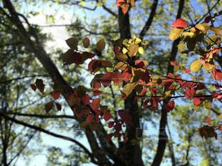 空,公園,紅葉,葉,秋空,草木,空の日