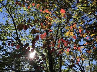 秋,紅葉,景色,秋空,草木,陽ざし