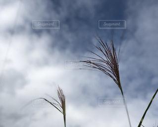 秋の空の写真・画像素材[1495444]