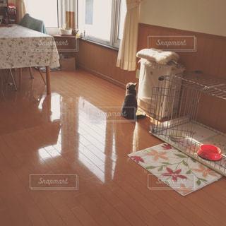 猫とおひさまの。の写真・画像素材[1794330]