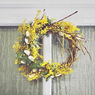 花,植物,黄色,ミモザ,イエロー,色,黄,草木,yellow,ネコヤナギ,ミモザリース,色彩,春