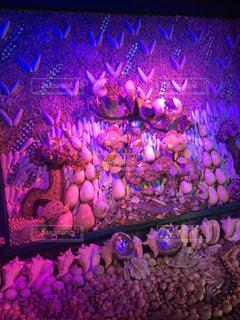 貝殻,貝,桃色,pink,ぴんく,竹島ファンタジー館,ぴんく色