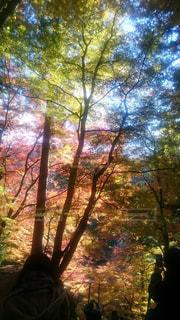 空,秋,紅葉,森林,木,景観