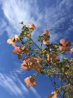 空,秋,屋外,雲,紫陽花,秋空,草木