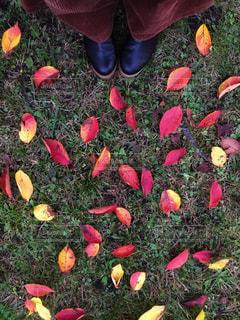 桜の落ち葉と一緒にの写真・画像素材[1567508]