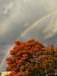 空,紅葉,虹,住宅街,ポジティブ