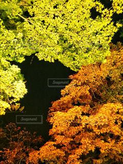 函館の紅葉の写真・画像素材[1574338]