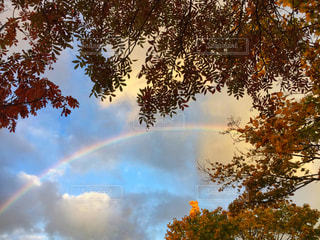 空,秋,紅葉,青,虹,北海道,レインボー,未来,雨上がり,函館,ラッキー,秋空,希望,ナナカマド,フォトジェニック,インスタ映え,七竈