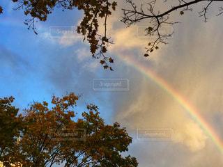 空,秋,紅葉,青空,青,虹,北海道,レインボー,未来,雨上がり,函館,ラッキー,秋空,希望,ナナカマド,フォトジェニック,インスタ映え,七竈